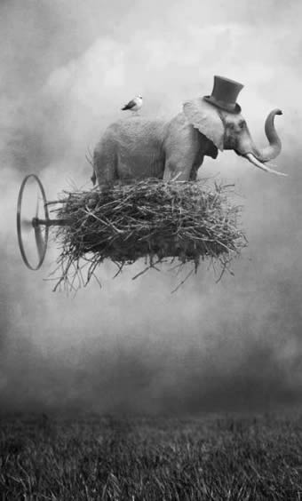 make elephants fly 3